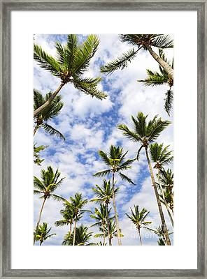 Palm Trees Framed Print by Elena Elisseeva