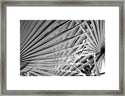 Palm Veils Framed Print by Leigh Meredith