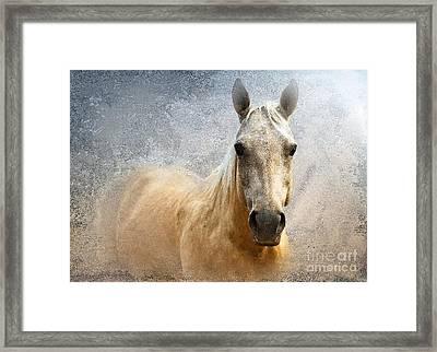 Palomino Framed Print by Betty LaRue