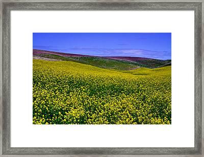 Palouse Hills Canola Fields Framed Print by David Patterson