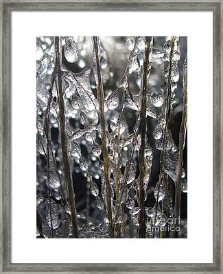 Palpable Framed Print by Tina Marie