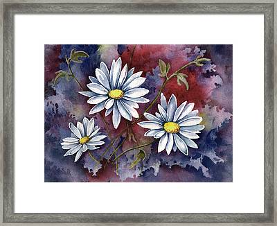 Pampa Daisies Framed Print by Sam Sidders