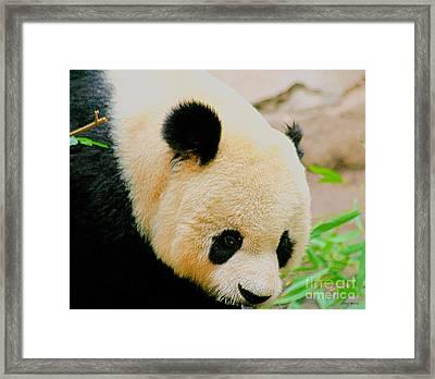 Panda  Framed Print by Cheryl Young