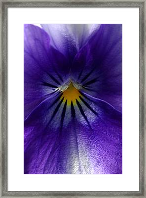 Pansy Abstract Framed Print by Lisa Phillips