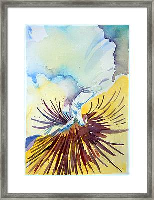 Pansy Faced Framed Print by Mindy Newman