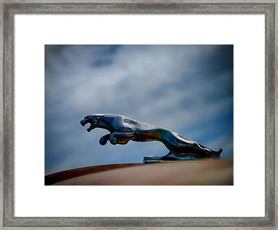Panther Hoodie Framed Print by Douglas Pittman