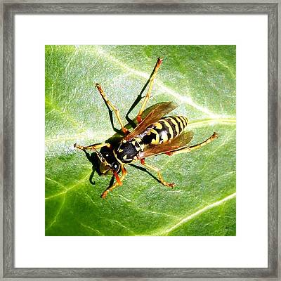 Paper Wasp Framed Print by Will Borden