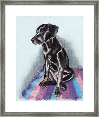 Papi The Labby Framed Print by Sherri Strikwerda