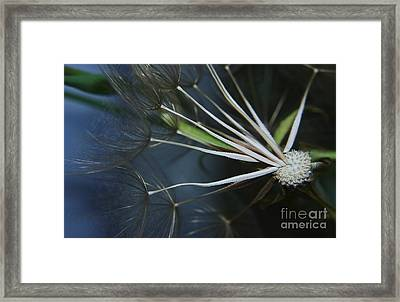 Parachute Seeds  Framed Print by Jeff Swan