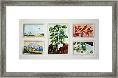 Parcels Of Nature Framed Print by Terri Mills
