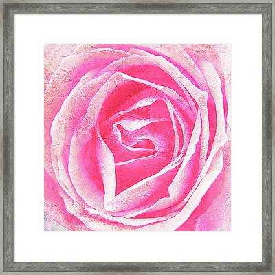 Parfume Of Roses Framed Print by Susanne Kopp