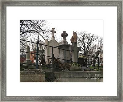 Paris Cemetery - Pere La Chaise - Wild Cats Roaming Through Cemetery Framed Print by Kathy Fornal