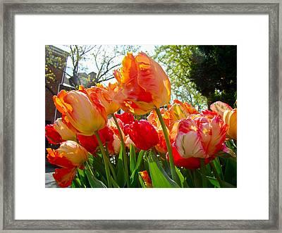 Parrot Tulips In Philadelphia Framed Print by Mother Nature