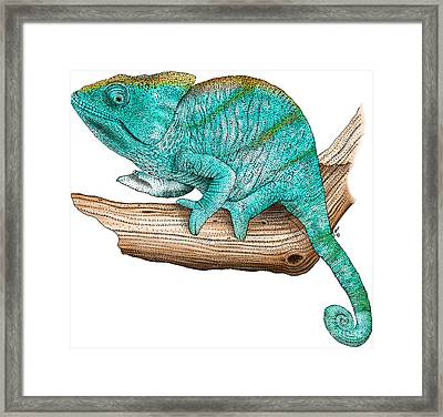 Parson's Chameleon Framed Print by Roger Hall and Photo Researchers