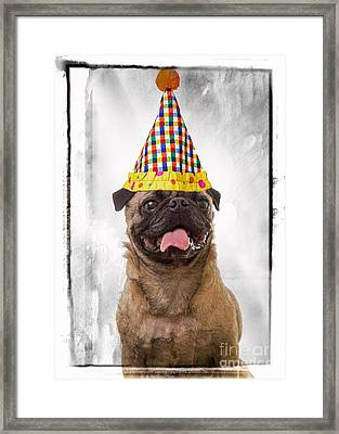 Party Animal Framed Print by Edward Fielding