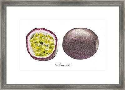 Passiflora Edulis Fruit Framed Print by Steve Asbell