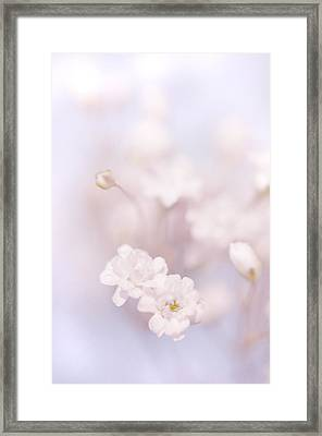 Passion For Flowers. White Pearls Of Gypsophila Framed Print by Jenny Rainbow