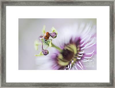 Passion Lady Framed Print by Jacky Parker