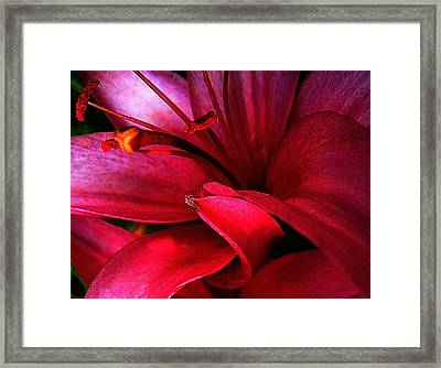 Passionate Lily Framed Print by Shirley Sirois