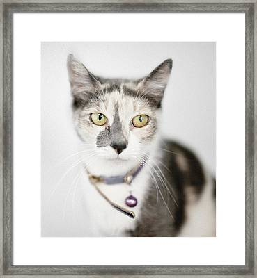 Pastel Calico Cat With Large Yellow Eyes Framed Print by Roz Todaro