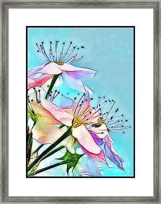 Pastel Petals Framed Print by Judi Bagwell