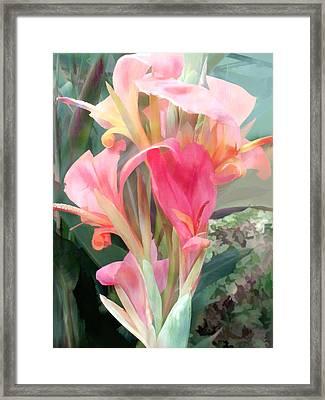 Pastel Pink Cannas Framed Print by Elaine Plesser