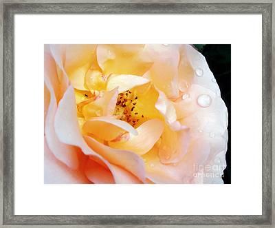 Pastel Rose Framed Print by Kaye Menner