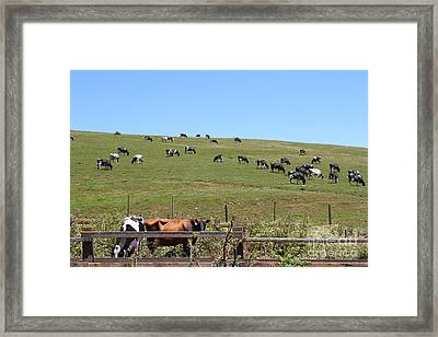 Pastoral Landscape Of Point Reyes California . 7d15962 Framed Print by Wingsdomain Art and Photography