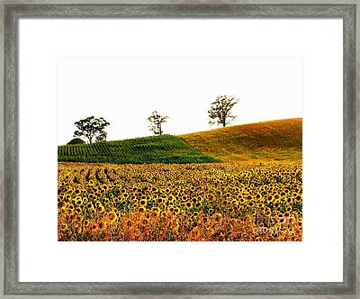 Patchwork Fields Framed Print by Marilyn Smith