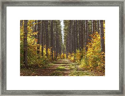Path Into The Forest In Autumn Sault Framed Print by Susan Dykstra
