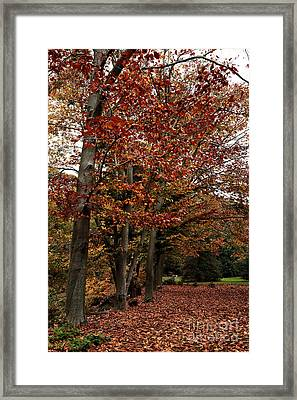 Path Of Leaves Framed Print by John Rizzuto