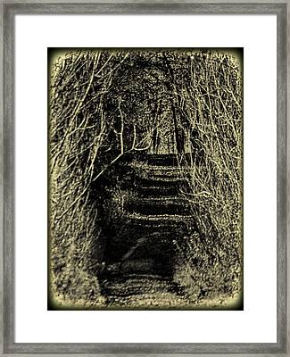 Path Of Sticks Framed Print by Thomas Young