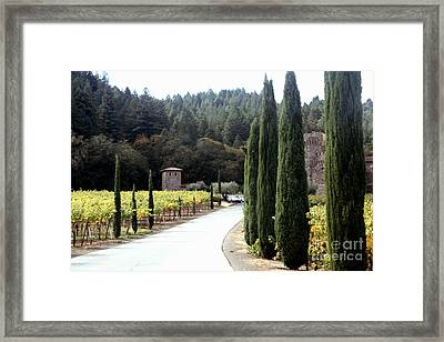 Path To Amerosa Framed Print by Gail Salituri