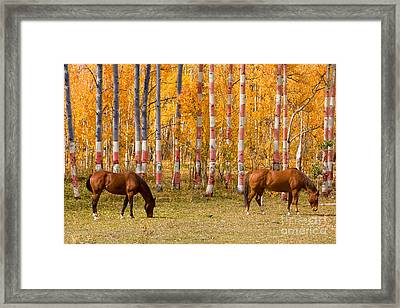 Patriotic Autumn Framed Print by James BO  Insogna