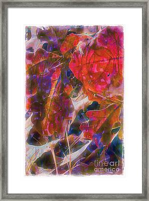 Patterns In Scarlet Framed Print by Judi Bagwell