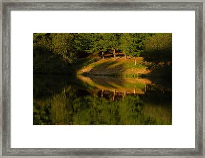 Patterns Of Nature Framed Print by Karol Livote
