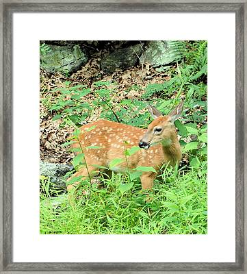 Pausing For A Snack Framed Print by
