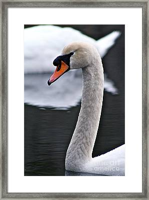 Peaceful Pond Framed Print by Eric Chapman