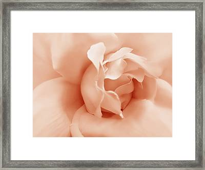 Peach Pastel Rose Flower Framed Print by Jennie Marie Schell