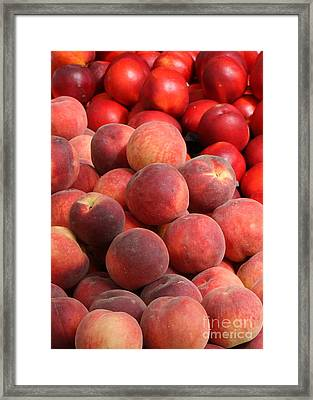 Peaches And Nectarines Framed Print by Carol Groenen