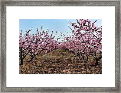 Peaches To Be Framed Print by Skip Willits