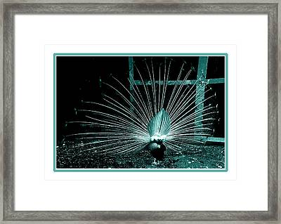 Peacock Blues Tail Framed Print by LeeAnn McLaneGoetz McLaneGoetzStudioLLCcom