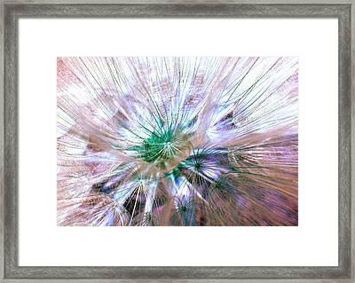 Peacock Dandelion - Macro Photography Framed Print by Marianna Mills