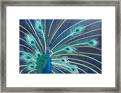 Peacock Framed Print by Estephy Sabin Figueroa