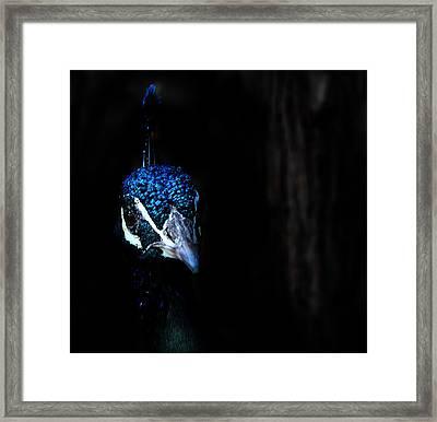 Peacock In The Dark Framed Print by Radoslav Nedelchev