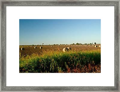 Peanut Bales In Field Framed Print by Douglas Barnett