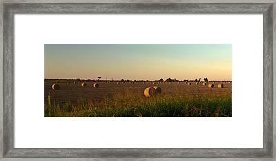 Peanut Field Bales At Dawn 1 Framed Print by Douglas Barnett