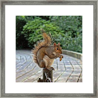 Peanuts For Lunch Framed Print by Jasna Buncic