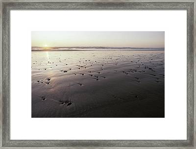 Pebbles Form Patterns On A Sandy Ocean Framed Print by Jason Edwards