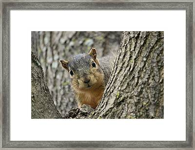 Peek A Boo Squirrel Framed Print by Rosanne Jordan